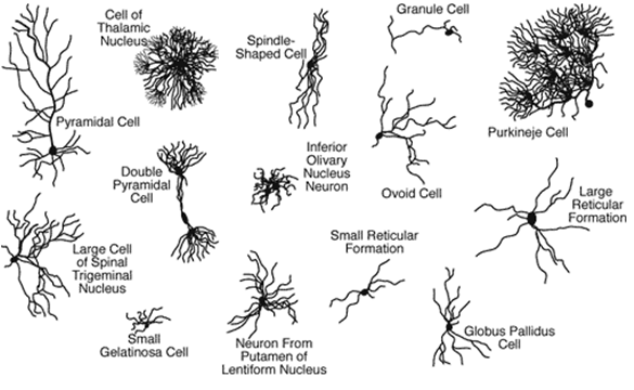 NeuronTypes