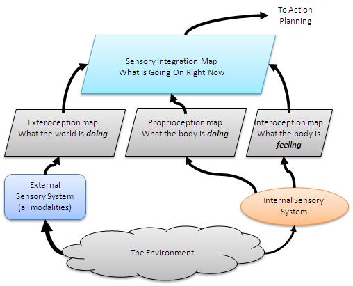 Sensory-maps